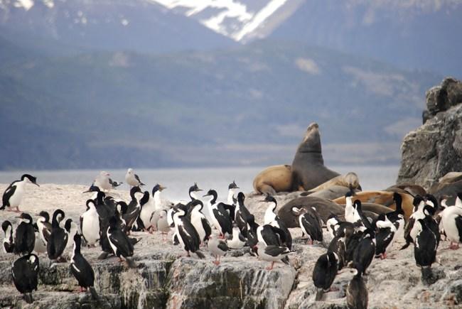 Isla de Los Lobos (Ushuaia)