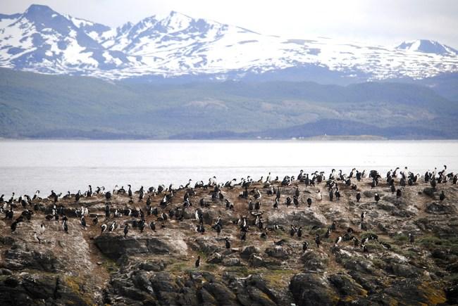 Isla de Los Pájaros en Ushuaia