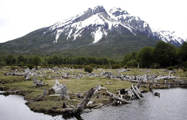 Paisaje del PN Tierra del Fuego