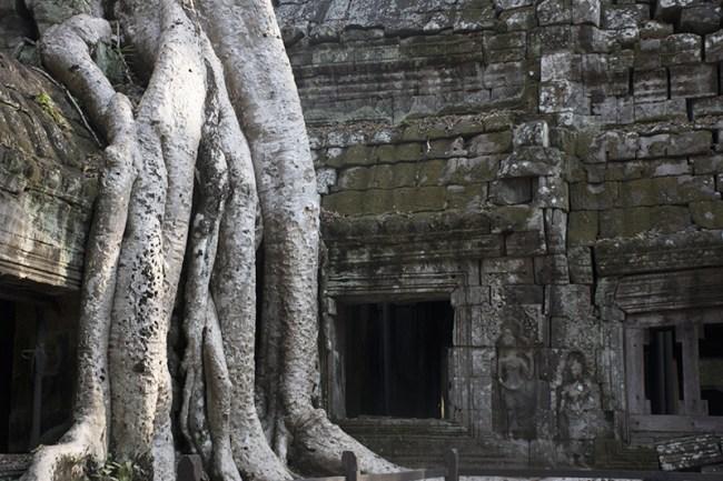 Increíble como creció el árbol ahí