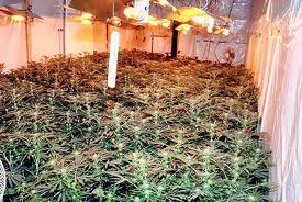 Gardai are examining the growhouse in Portsalon this evening.