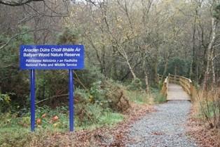 Ballyarr Wood