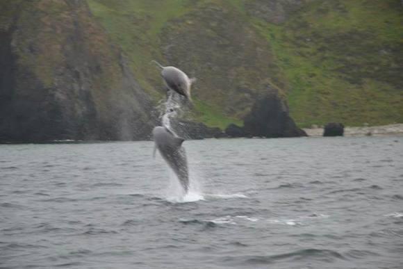 dolphins malin head