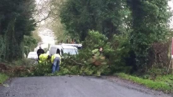 Workmen remove a fallen tree between Castlefin and Raphoe in today's heavy winds.