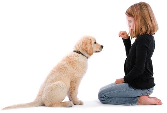 positive-dog-training-tips