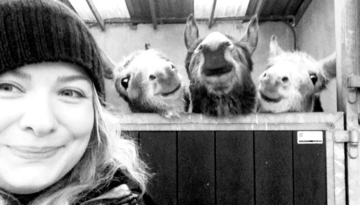 Delighted donkeys become selfie stars – but they need your help