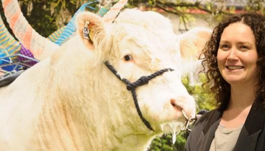 Donegal artist's sculptures are unbelieva-bull