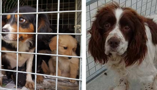 Animal lovers heed call to keep charity on the road