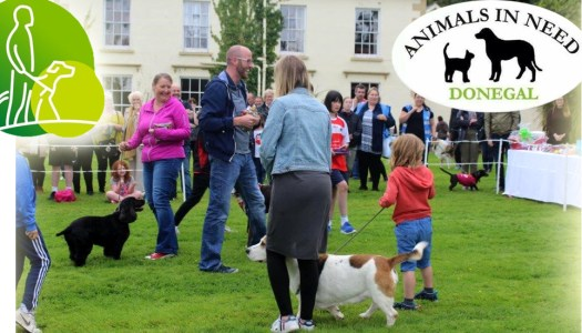 There's a pawsome puppy party in Letterkenny this Saturday