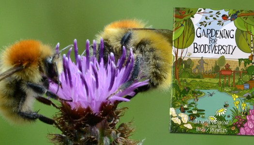 Donegal Heritage Office shares free booklet on looking after wildlife in your garden