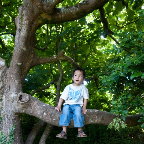 Duy on a tree on the coastal part near Croyde Bay, North Devon - 28/6/2010 (4.5 years old)