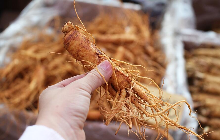 Image Result For Where Can I Find Korean Red Ginseng