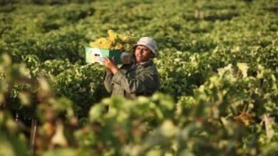 Photo of فجوة كبيرة بين الصادرات والواردات الزراعية في فلسطين