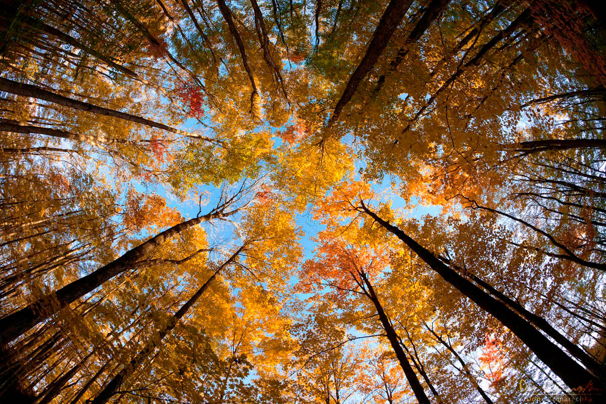 Leaves Fall Desktop Wallpaper Don Komarechka Photography Barrie Ontario 187 Fisheye Fall