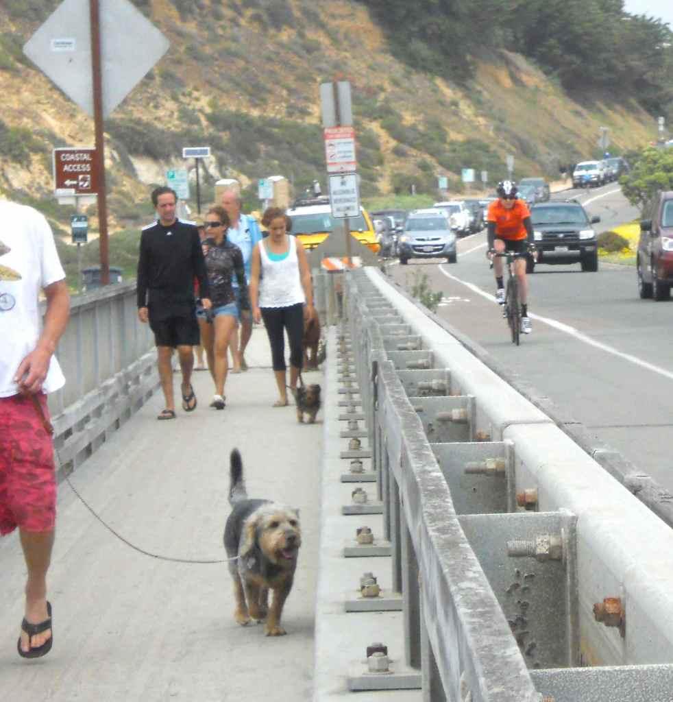 walkers-bikers-dogs