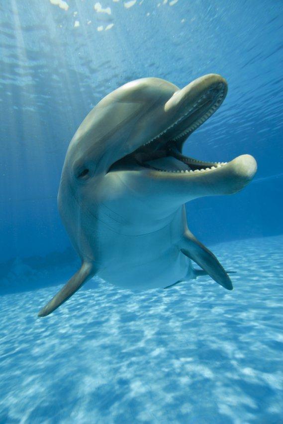 Che cosa significa sognare un delfino  DonnaD