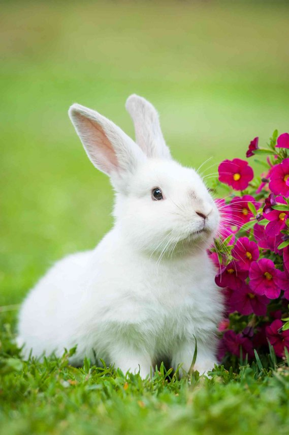 Nomi per conigli  DonnaD