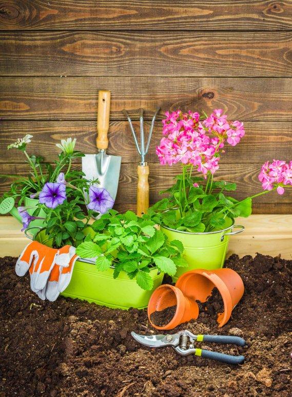 Giardinaggio Fai Da Te Usato Brescia