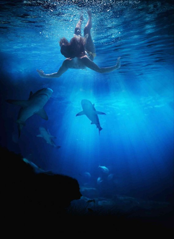 Sognare squali cosa significa  DonnaD