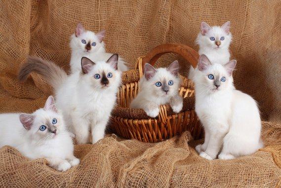 Allattamento efficace 5 consigli per allattare i gattini