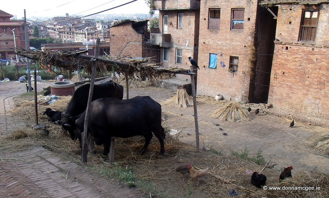 Street life in Nepal - Coach Travel Adventure - Nepal