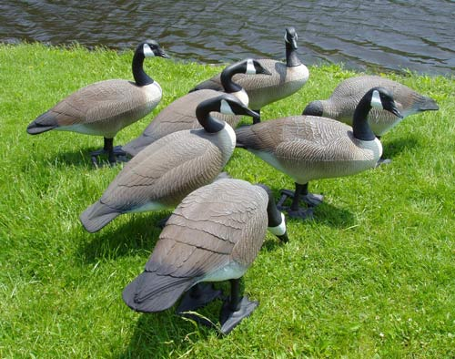 Garden Decor Goose For Hunting Supplieranufacturers At Alibaba Com