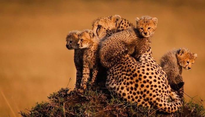 Animali 5 fantastiche foto di cuccioli con le mamme