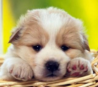 Sites Com Fotos Cachorro Sites Com Fotos de Cachorro
