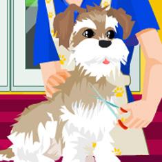 Jogos de Pet Shop Jogos de Pet Shop