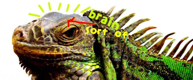 online engagement lizard brain