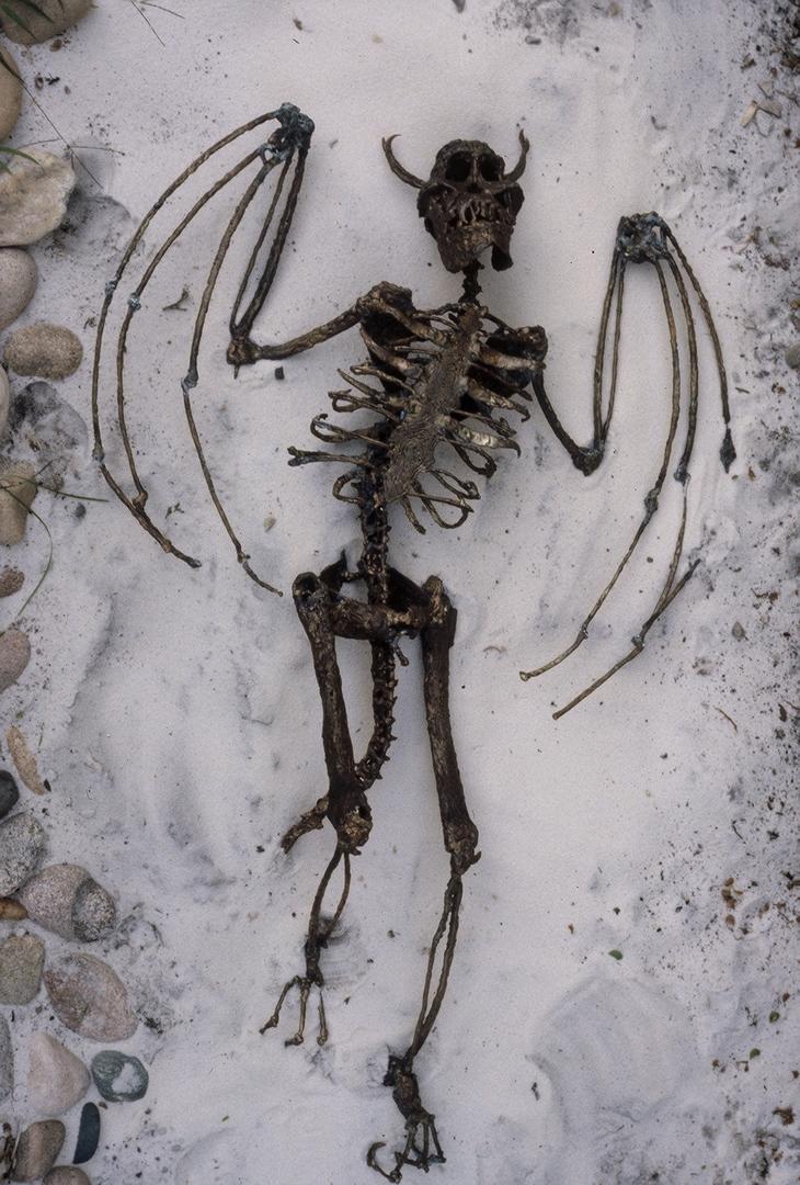 golden eagle skeleton diagram obtuse triangle scalene venn bird bones bone parts ~ elsavadorla