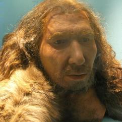 Bones Human Skeleton Diagram Bmw E90 Wiring The Original Neanderthal From Neander Valley