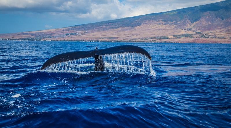 Több mint 100 kilogramm szemetet találtak egy skót szigeten partra sodródott bálna tetemében
