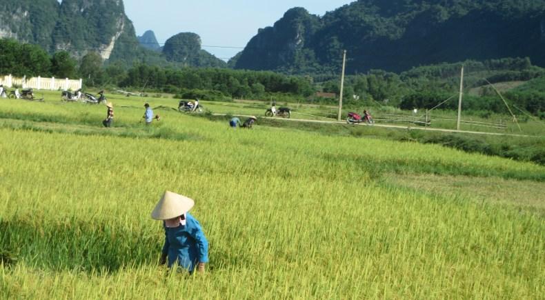 Farmers in rural Vietnam.