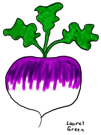 a drawing of a turnip