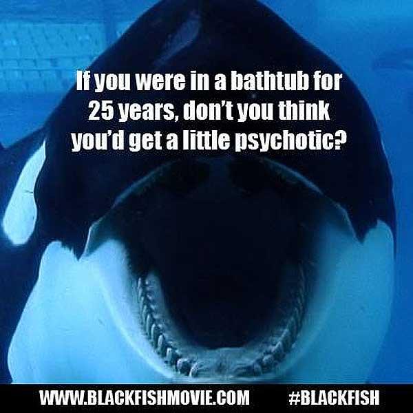 Orca Captivity Quotes QuotesGram