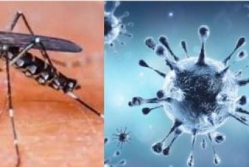 कोरोना संकट के बीच डेंगू का भय बरकरार, समय रहते जागरूकता जरूरी