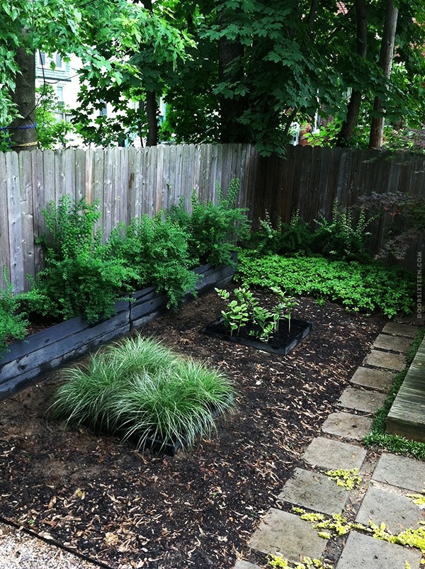 doorsixteen_gardenprogress_update2