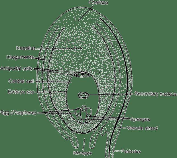 NEET (NTA)-National Eligibility cum Entrance Test (Medical