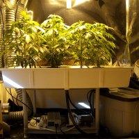 Grow 1 Set-up (G13)