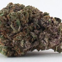 Super Grand-Daddy Purple Chronicle