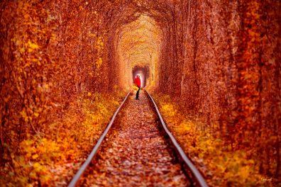 el-tunel-del-amor-el-lugar-mas-romantico-del-mundo