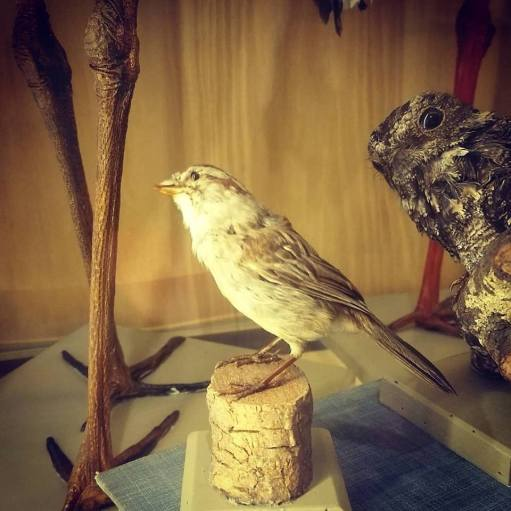 Museo Ameghino (2)