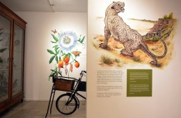 Museo Ameghino