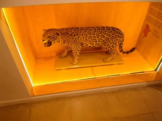Museo Ameghino (4)