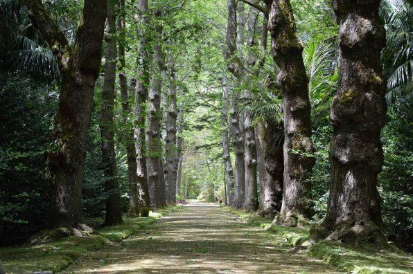 Parque-Terra-Nostra-(2)
