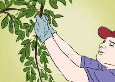 how-to-grow-an-apple-tree-4