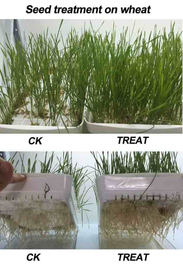 seed germination treatment agent