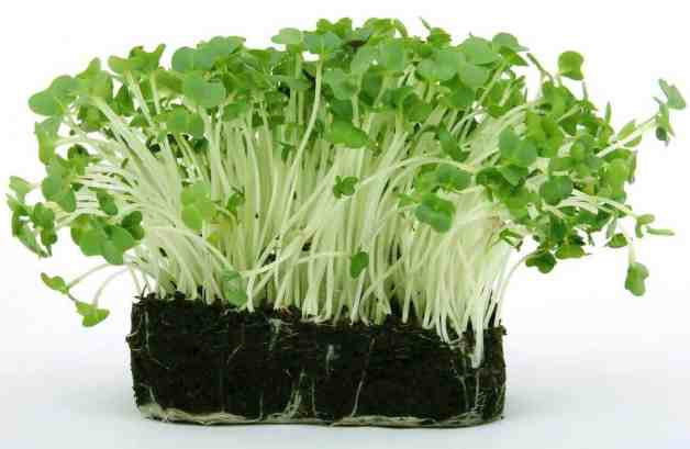 stimulate root growth