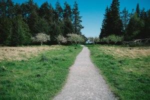 woodland-burial